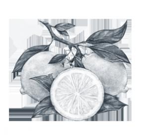 Frische Zitronenzesten